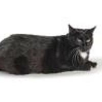 Adopt A Pet :: Ava 8699 - Columbus, GA