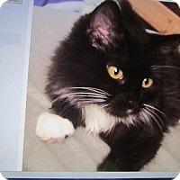 Adopt A Pet :: Danica - Grand Junction, CO