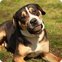 Adopt A Pet :: Noah - Lafayette, IN