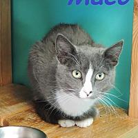 Adopt A Pet :: Maco - Brookings, SD