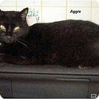 Adopt A Pet :: Aggie - Jacksonville, FL