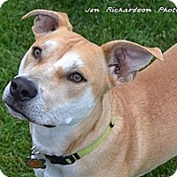 Adopt A Pet :: Becker - PENDING, in Maine - kennebunkport, ME