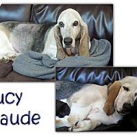 Adopt A Pet :: Lucy Maude - Marietta, GA