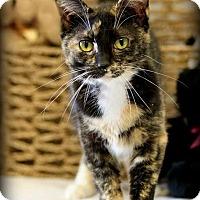 Adopt A Pet :: SASHA! - Owenboro, KY