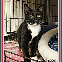 Adopt A Pet :: Prince Pepper - New Richmond,, WI