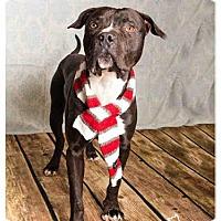 Adopt A Pet :: *HOSS* - Salt Lake City, UT