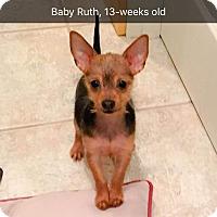 Adopt A Pet :: *Puppy*