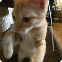 Adopt A Pet :: Wiley - Lauderhill, FL
