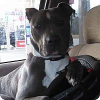 Adopt A Pet :: Sahara - Unionville, VA