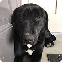 Adopt A Pet :: Benz - Southbury, CT