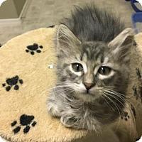 Adopt A Pet :: JoJo PENDING ADOPTION - Chandler, AZ