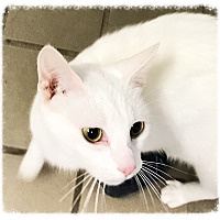 Adopt A Pet :: Jazz 2 - Los Alamitos, CA