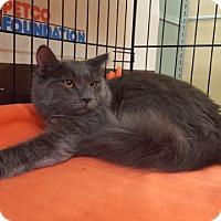 Adopt A Pet :: Marion (MP) - Little Falls, NJ