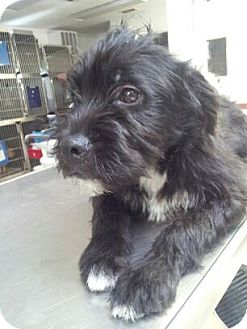 Wirehaired Fox Terrier Mix Dog for adoption in Waldorf, Maryland - Maria