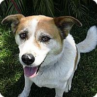 Adopt A Pet :: Grace - Corona, CA
