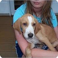 Adopt A Pet :: Rui - In CT! - Adamsville, TN