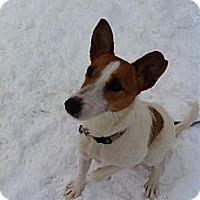 Adopt A Pet :: Mandy - Hancock, MI