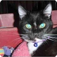 Adopt A Pet :: Elsie - Pasadena, CA