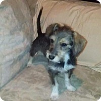 Adopt A Pet :: Maya - Las Vegas, NV