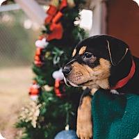 Adopt A Pet :: Minerva - Gadsden, AL