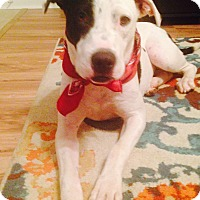 Adopt A Pet :: Sissy - Glastonbury, CT