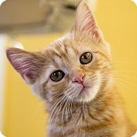 Adopt A Pet :: Sansa - Chicago, IL