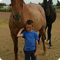 Quarterhorse/Grade Mix for adoption in Peralta, New Mexico - **FLAME