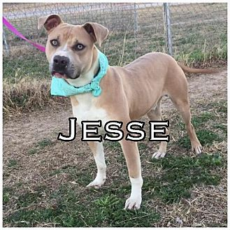 Terrier (Unknown Type, Small) Mix Dog for adoption in Comanche, Texas - Jesse