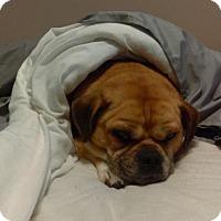 Adopt A Pet :: Gizmo - Blackstock, ON