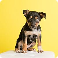 Adopt A Pet :: Babette - Ogden, UT