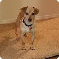Adopt A Pet :: MEKO - Franklin, TN