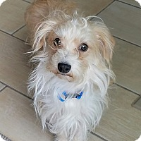 Adopt A Pet :: Casper (DENVER) - Fort Collins, CO
