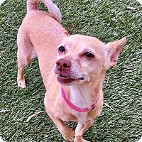 Adopt A Pet :: Diamond 2 - Las Vegas, NV