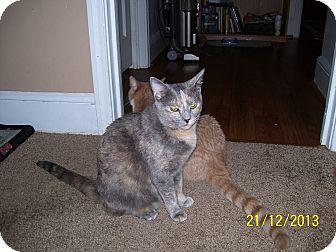 Calico Kitten for adoption in Waxhaw, North Carolina - Callie