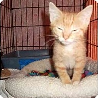 Adopt A Pet :: Bille - Fort Lauderdale, FL