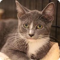 Adopt A Pet :: Dusty - Sacramento, CA