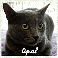 Adopt A Pet :: Opal - Walnut Creek, CA