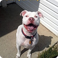 Adopt A Pet :: Debo - Tiffin, OH