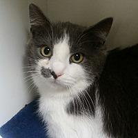 Adopt A Pet :: Squeaky - Medina, OH