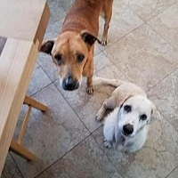 Adopt A Pet :: Mary Kate & Ashley BONDED PAIR - Tampa, FL