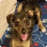 Adopt A Pet :: Emmy - Alexandria, KY
