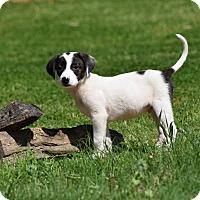 Adopt A Pet :: Tuxedo - Groton, MA
