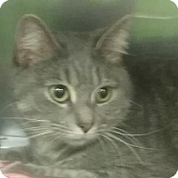 Adopt A Pet :: Sasha - Fall River, MA