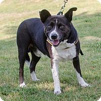 Adopt A Pet :: Artie - Greenwood, SC