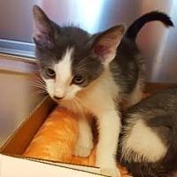 Adopt A Pet :: 6767 - Pompano Beach, FL