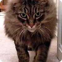 Adopt A Pet :: Samoa - Alexandria, VA
