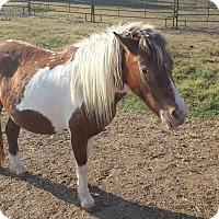 Adopt A Pet :: Ruby - Farmersville, TX