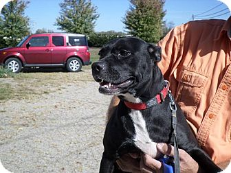 Pit Bull Terrier Mix Dog for adoption in Pataskala, Ohio - Maggie