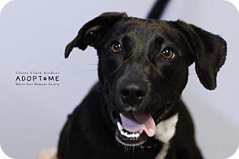 Terrier (Unknown Type, Medium) Mix Dog for adoption in Edwardsville, Illinois - Lizzie