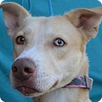 Adopt A Pet :: Gingy - Visalia, CA